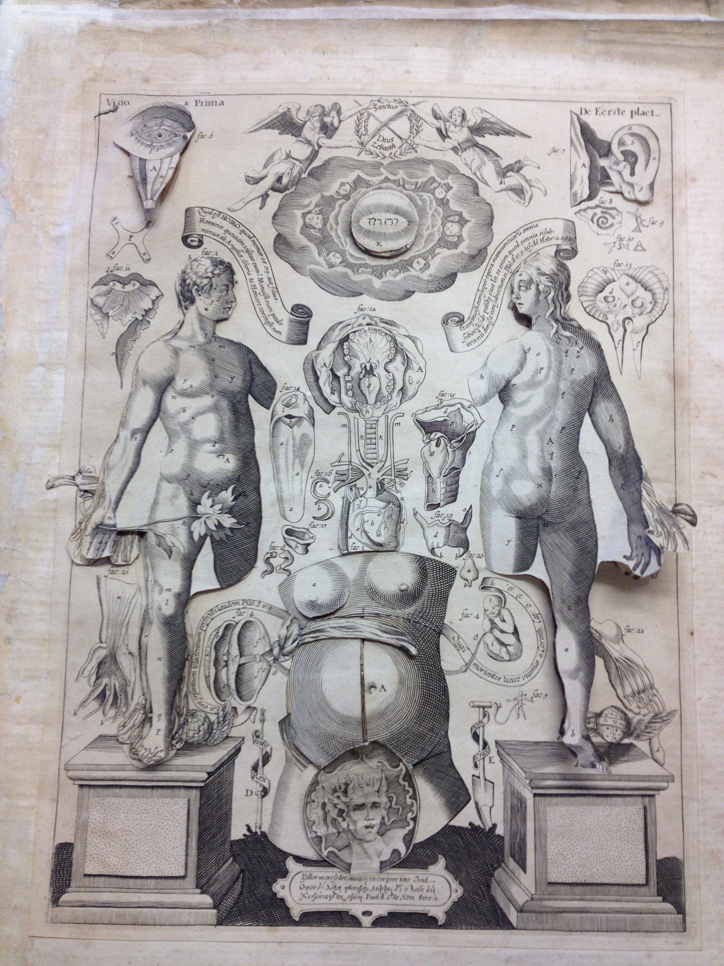 Johann Remmelin: a story of a 17th century anatomy flap book - Corpus