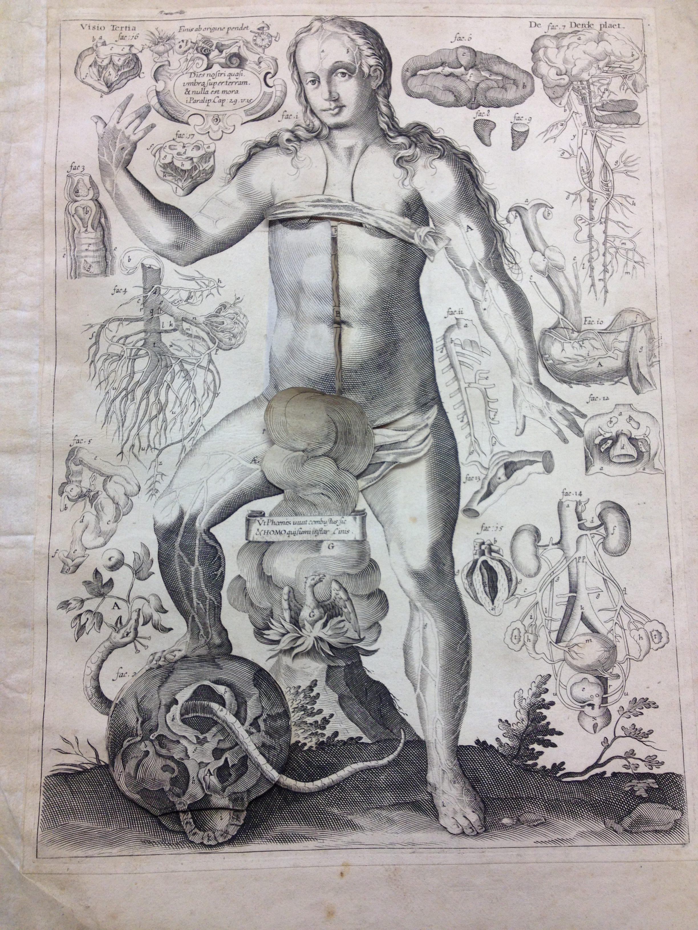 Johann Remmelin A Story Of A 17th Century Anatomy Flap Book Corpus