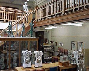 Trotter anatomy museum